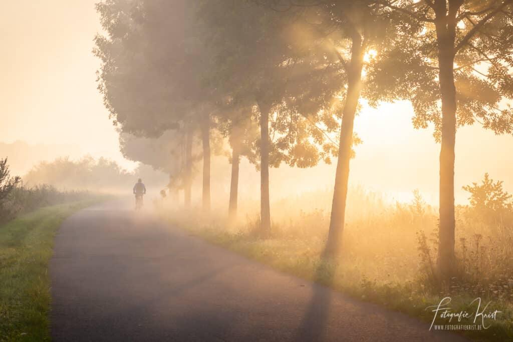 Een fietser doorklieft het laagje mist op het jaagpad langs de leie in Lauwe