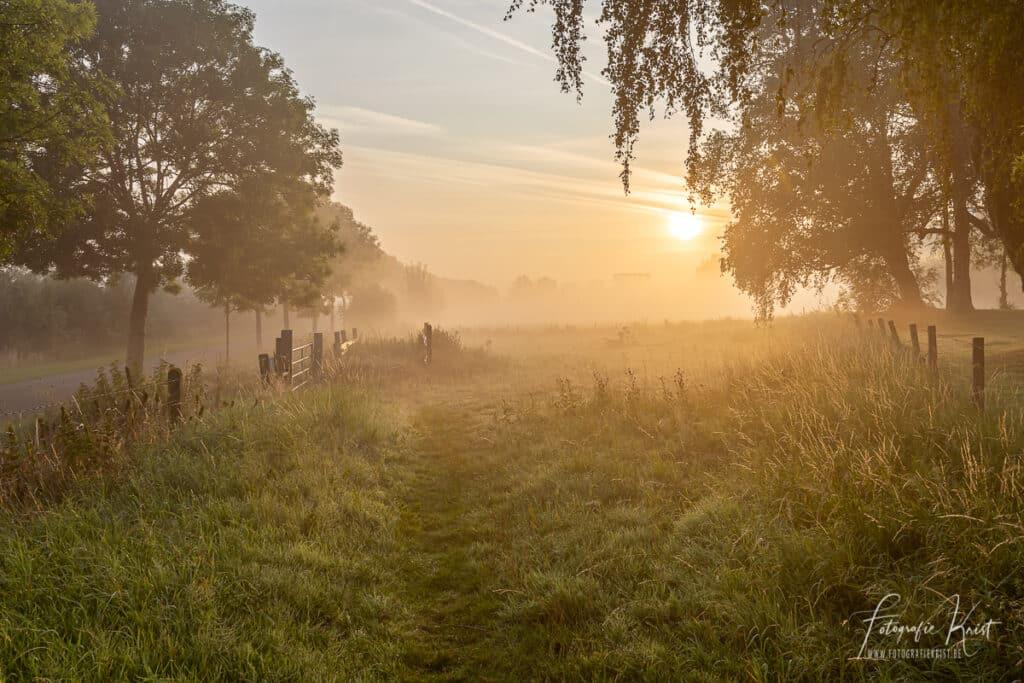 Sfeervolle zonsopkomst op de leiemeersen aan de oevers van de leie in Lauwe