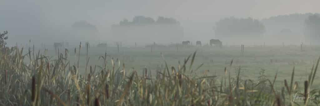 een sfeervolle ochtend op de velden langs de Leie in Kortrijk, Belgium